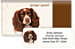Springer Spaniel Bonus Buy